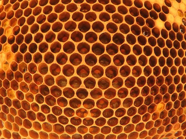 Honey bee eggs