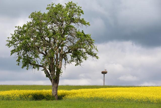 L'arbre et la cigogne