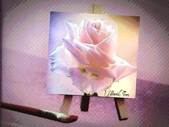 Pintando una Rosa...?