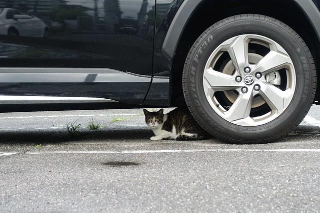 Today's Cat@2021−05−18