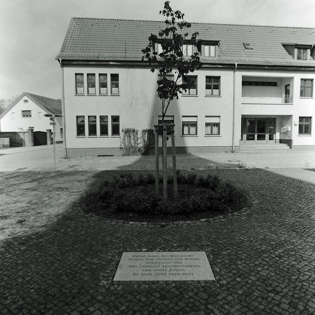Zossen Brandenburg Baum im Schatten der Kirche 11.5.2021