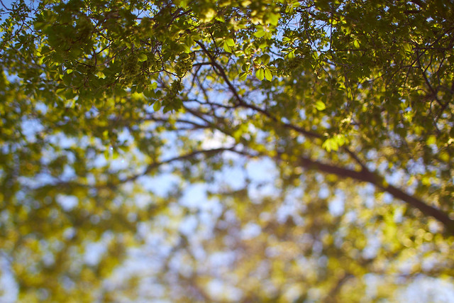 spring leaves impressions (2)