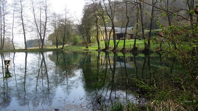 Les étangs de Fischbach