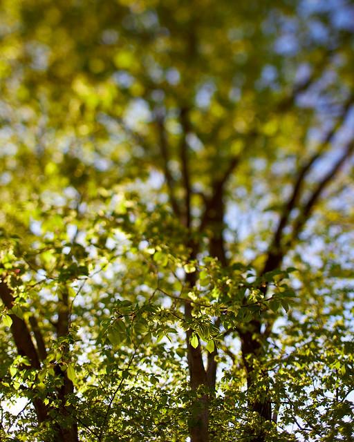 spring leaves impressions (1)