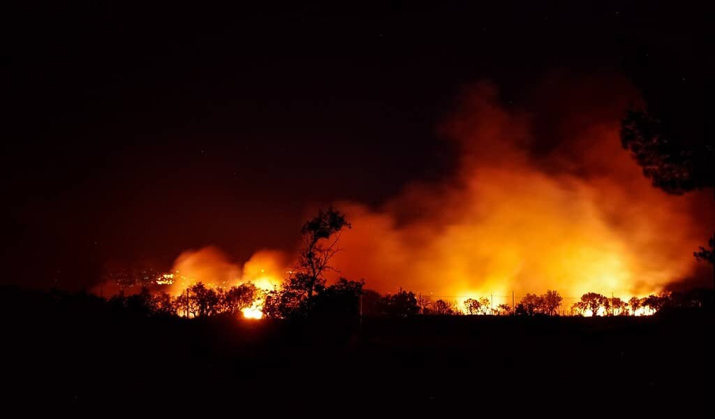 L'incendie de 2015 en Amazonie a affecté la végétation