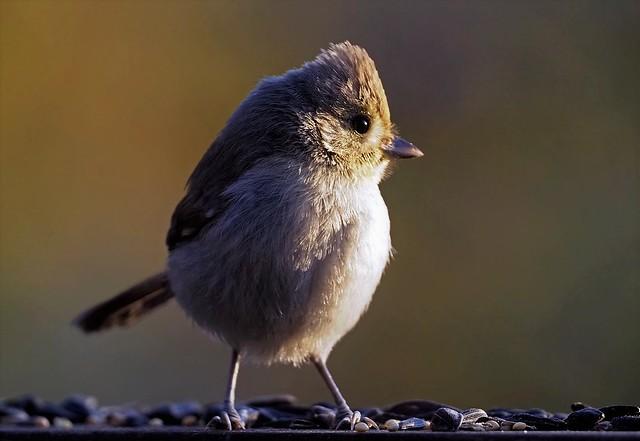 Surprise! A backyard bird