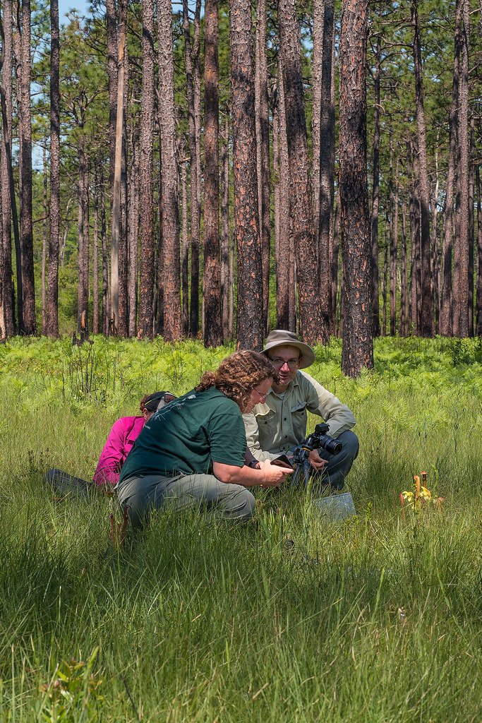 Rest of the group photographing blooming Hooded Pitcher Plant