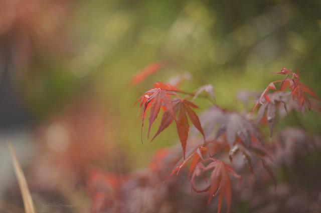 Maple...  Explored 😊