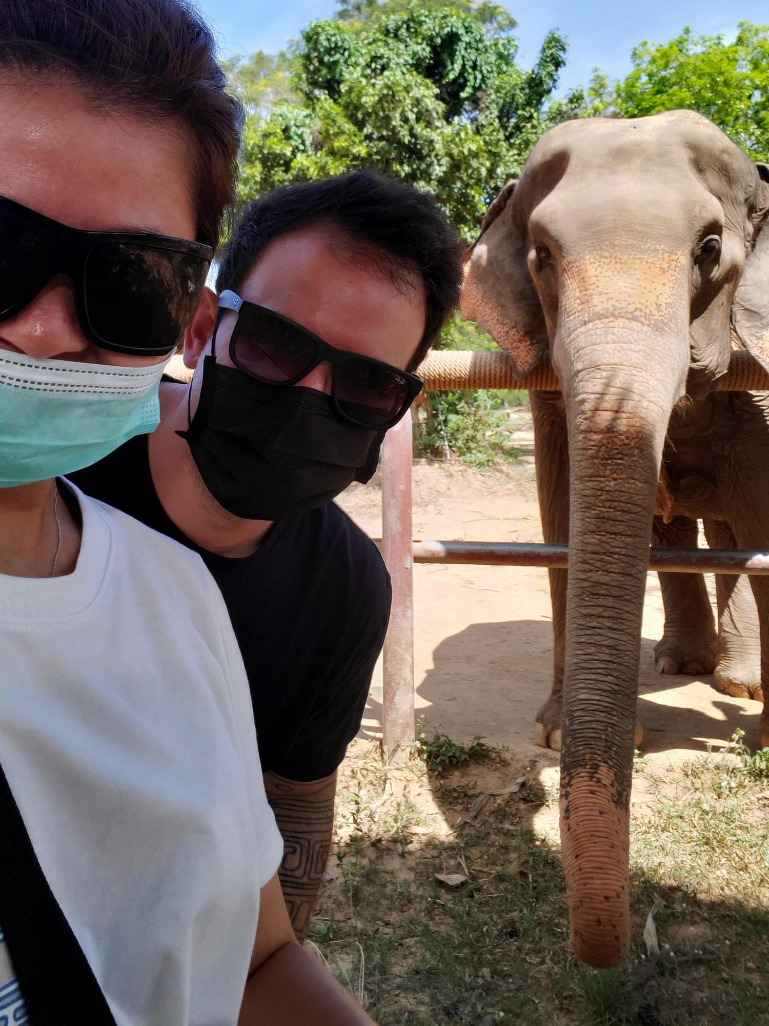 leftbanked despacito elephant
