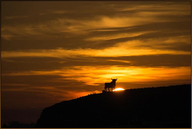 Toro at sunset