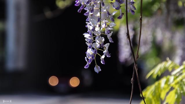 9754 - Flowers