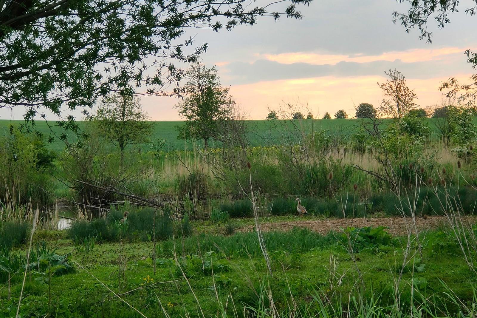 Hahnheimer Bruch und Selz im Selztal