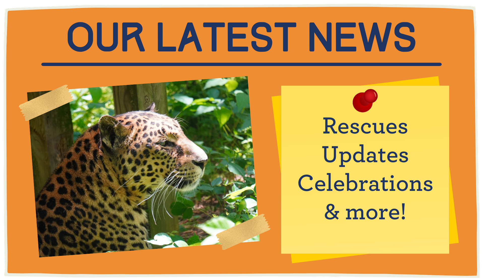 Find articles about Carolina Tiger Rescue and our animals