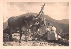 postcard - motivo - provincia bozano