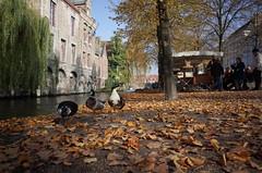 Bruges, October 2016