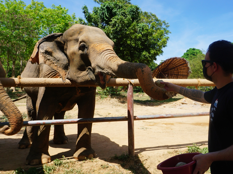 Koh Samui Elephant Sanctuary