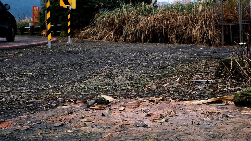 在陽金公路旁的捕捉籠附近,仍可看到餵養人在籠外鋪墊紙張、另外餵食的痕跡。攝影:曾以寧。