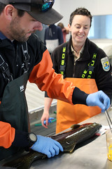 Staff at Winthrop National Fish Hatchery use samples from fish to look a variety of aspects to determine health