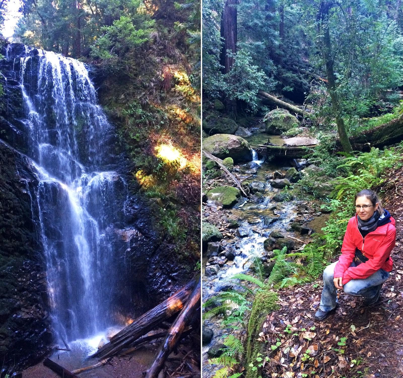 Big Basin Redwoods State Park, California, USA