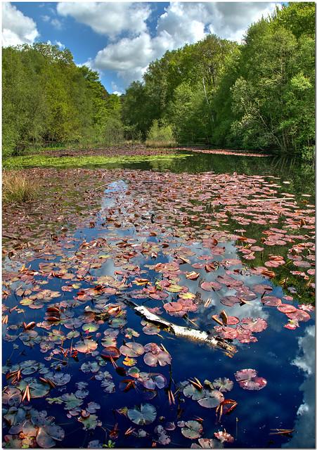 Upper Pond, Burnham Beeches
