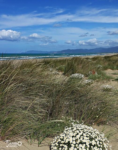Fiori sulle dune