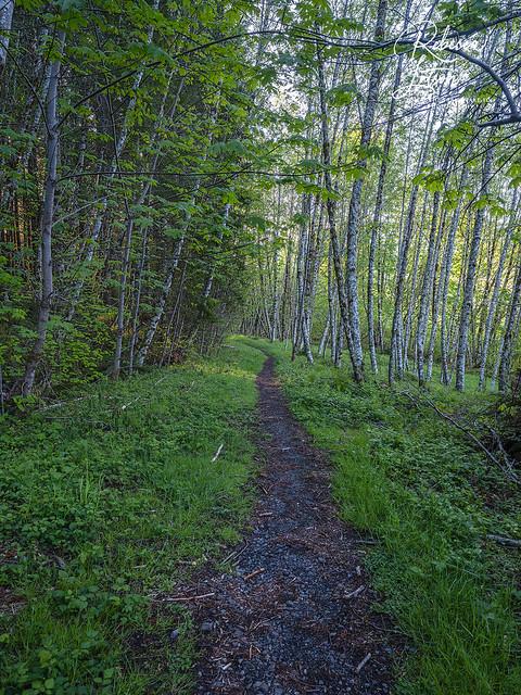 Trail Yin Yang