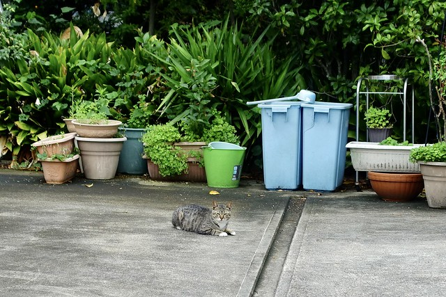 Today's Cat@2021−05−20