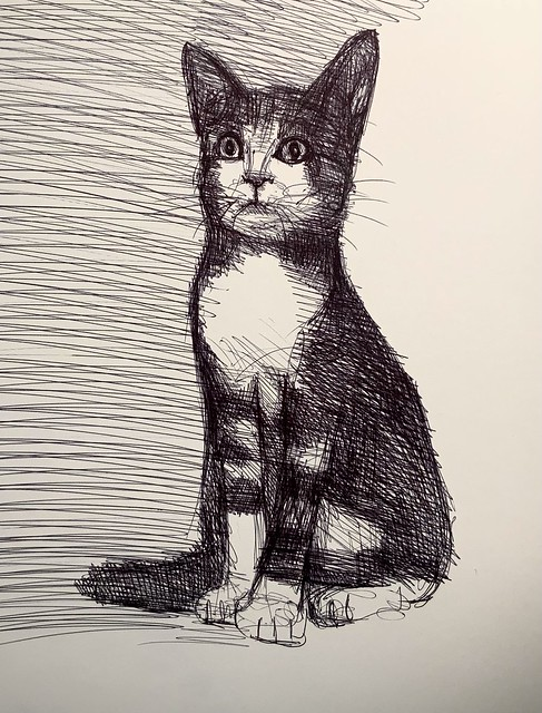 A Cat from Gresford North Wales. Ballpoint pen drawing by jmsw on card.