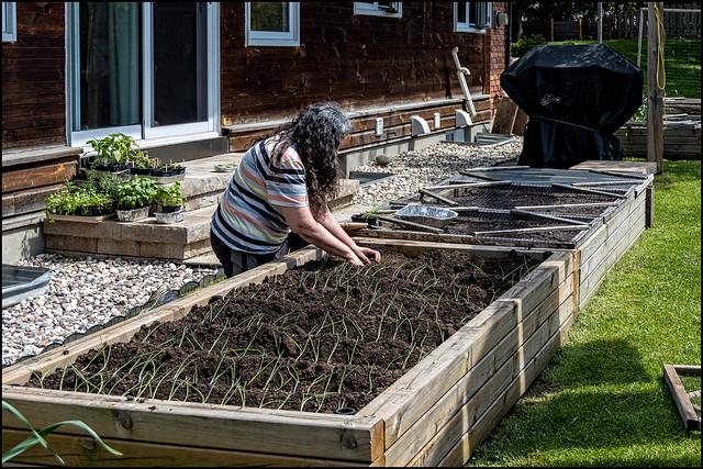 Jane Planting Onions - May 17 2021