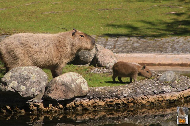 Besuch Zoo 09.05.21040