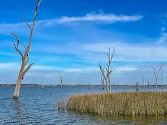 Lake Mulwala.jpg
