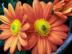 Flores...!!! ? (Explore ? Mayo 21 - 2021)