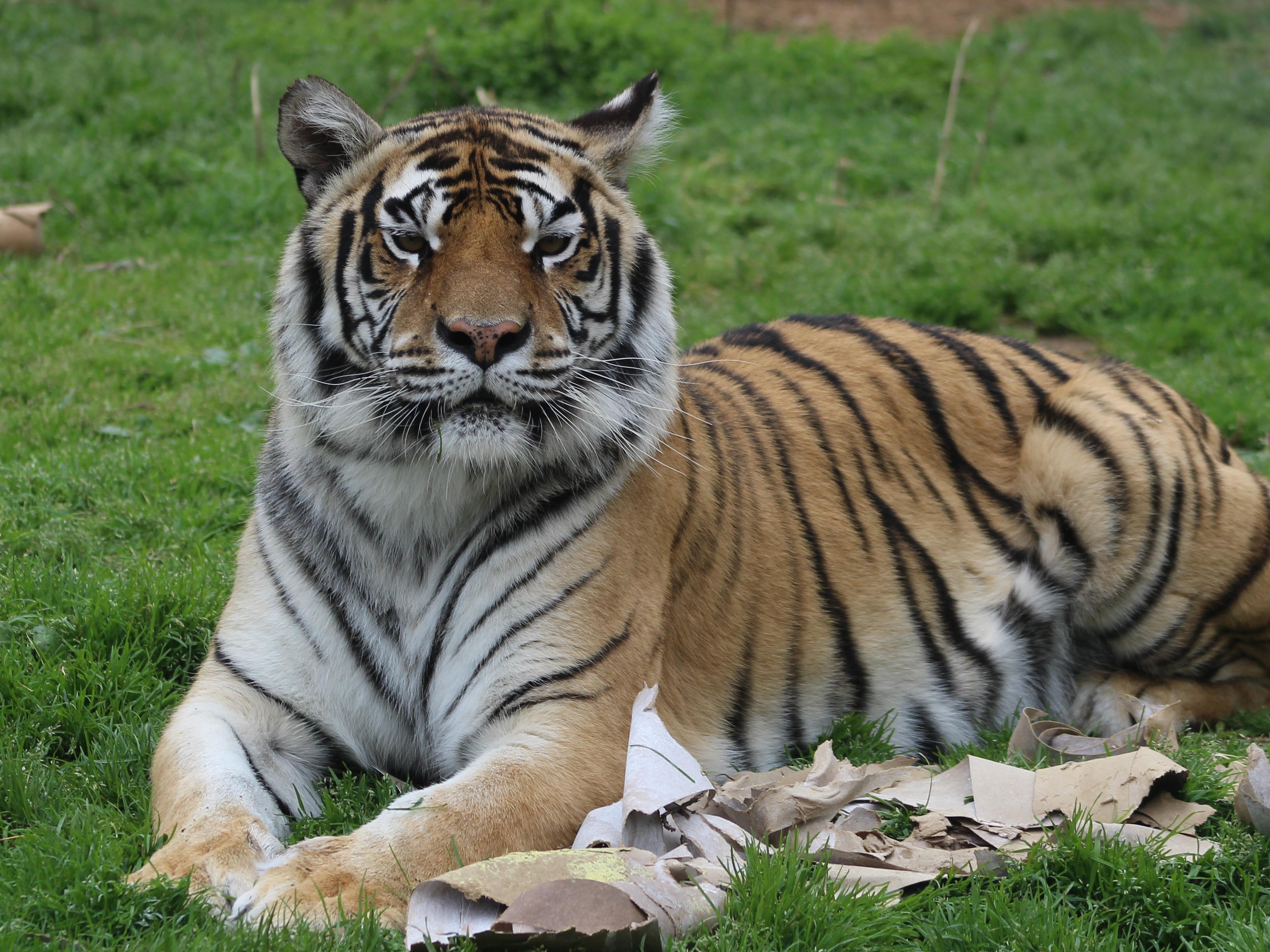 Donate to Carolina Tiger Rescue