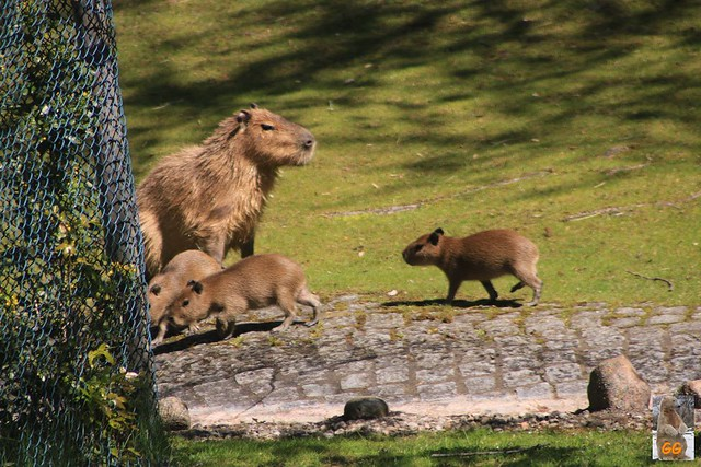 Besuch Zoo 09.05.21028