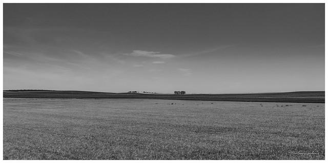 Paisaje de la campiña sevillana //Sevillian countryside landscape (EXPLORE 20/05/2021)