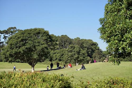 sydneypark stpeters dogs people park