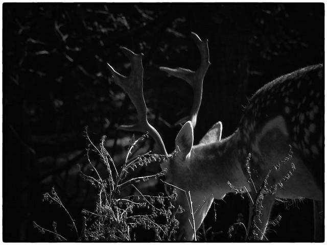 Nature   Black and White #008
