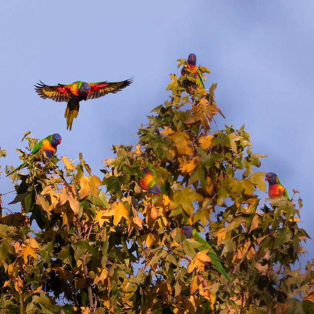 Parrot get-together