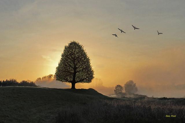 Ben Paul F0947 Landscape at sunrise with morning fog at Meinerswijk near Arnheim (Netherlands), 2021