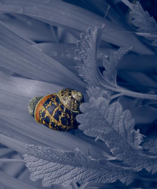 Gastropod in blue (in Explore)