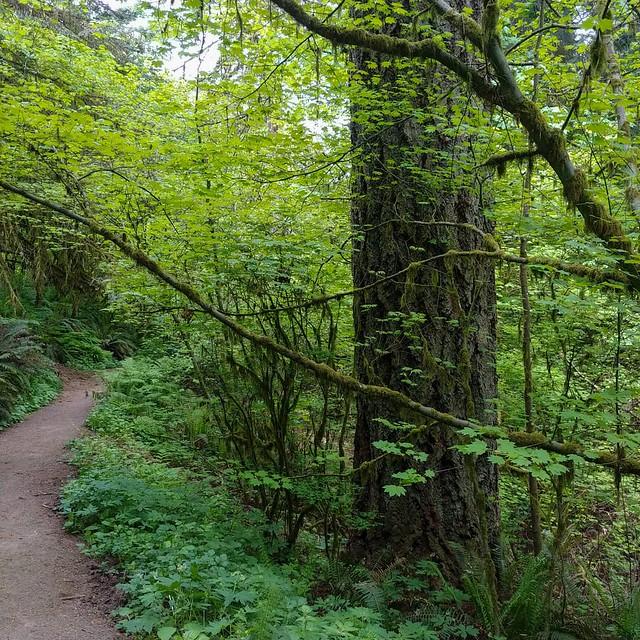 #trail #path hiking #spring #verdant #hoytarboretum #portland #pdx #PNW #🌿