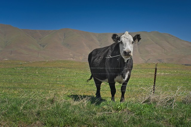 Cow and Gorge 3474 A