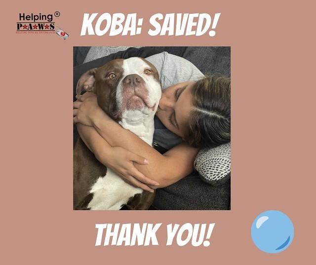 Koba is Saved!