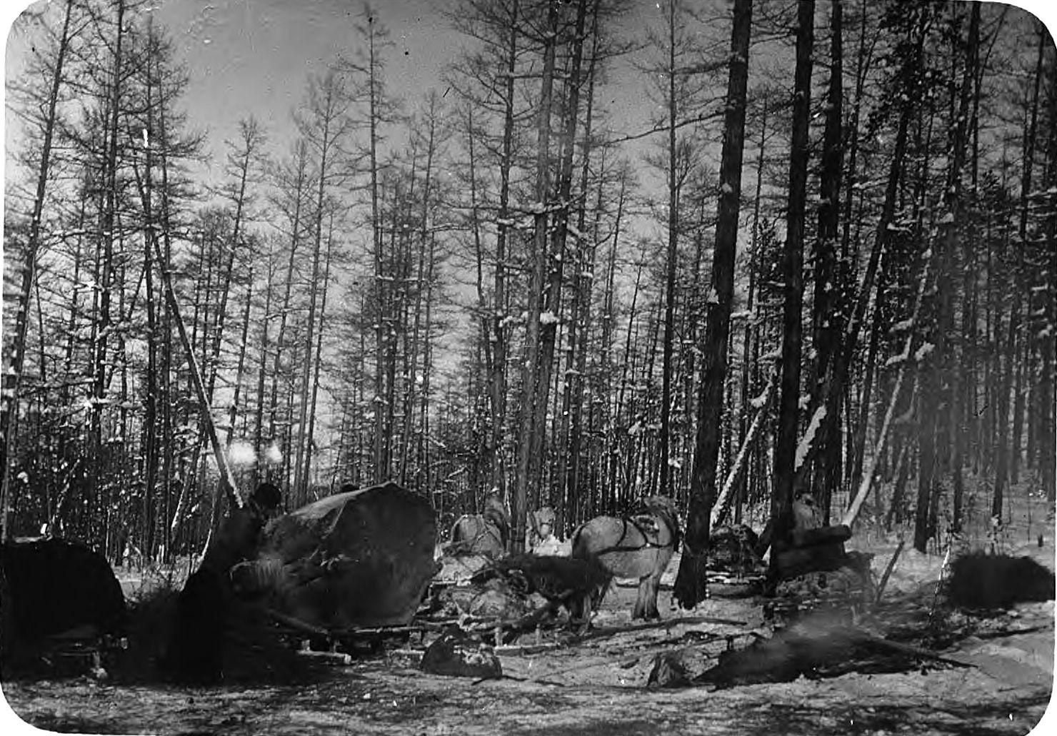 Обоз в зимнем лесу
