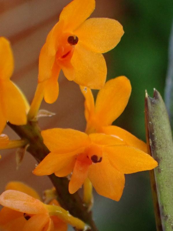 Les Orchidées chez Cloo en 2021 - Page 12 51193021812_b70101405a_c