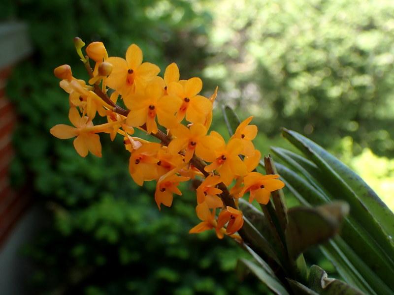 Les Orchidées chez Cloo en 2021 - Page 12 51193021822_b594806567_c