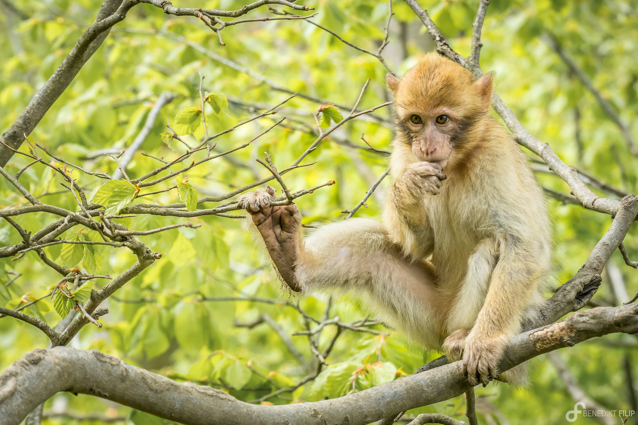 Monkey Gulch