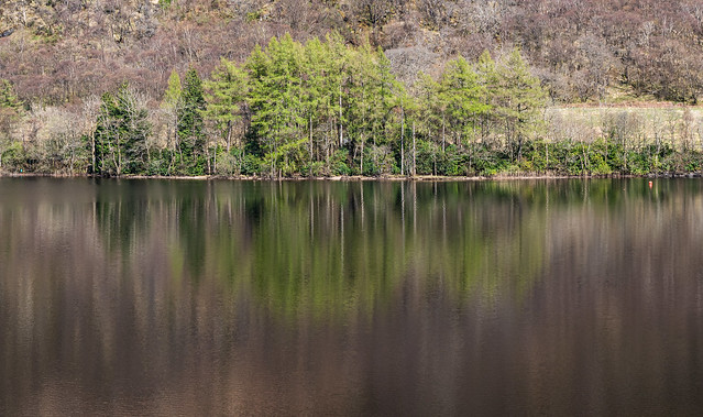 Trees on the Bank - April 2021