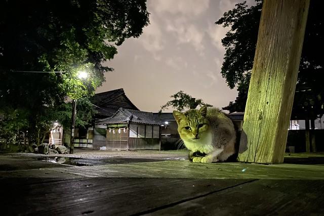Today's Cat@2021−05−21