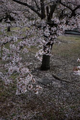 Sakura memories 2021 9
